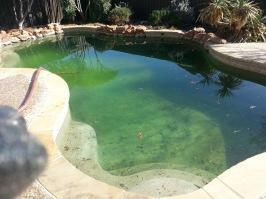 Algae in pool